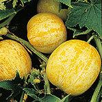 Lemoncucumber